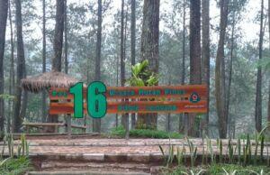 hutan pinus pal 16 dekat tangkuban perahu