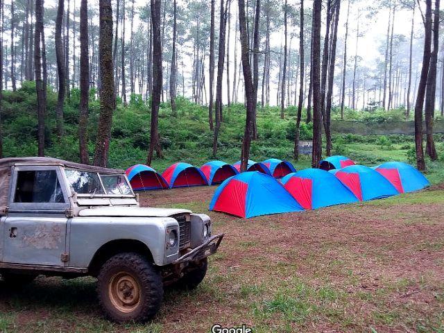 Kemah di hutan pinus pal 16