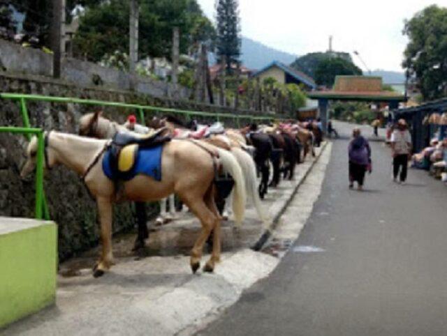 Berkuda menuju Grojogan sewu