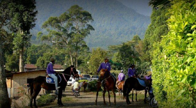 Berkuda di kebun teh gunung mas