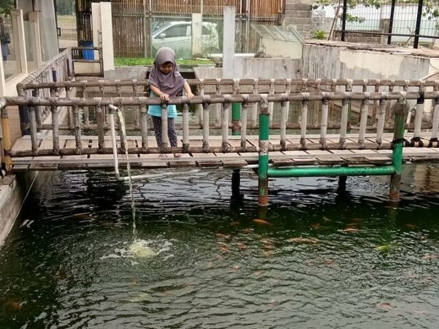 Bermain Ikan di Bird Park Palembang