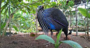 Burung yang Dilindungi di Bird Park Palembang