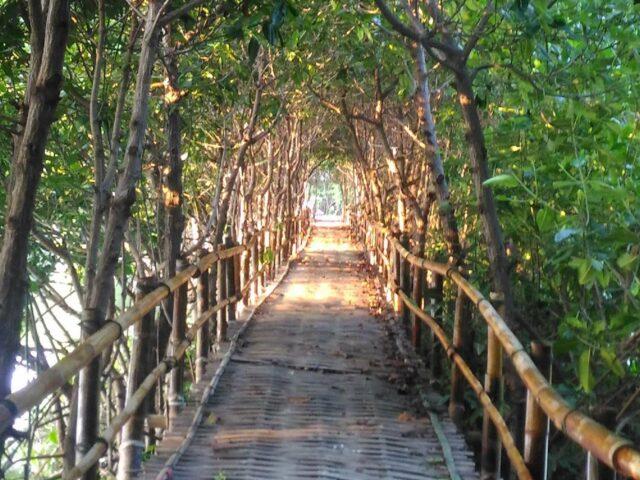 Dermaga Hutan Mangrove Pandansari Brebes