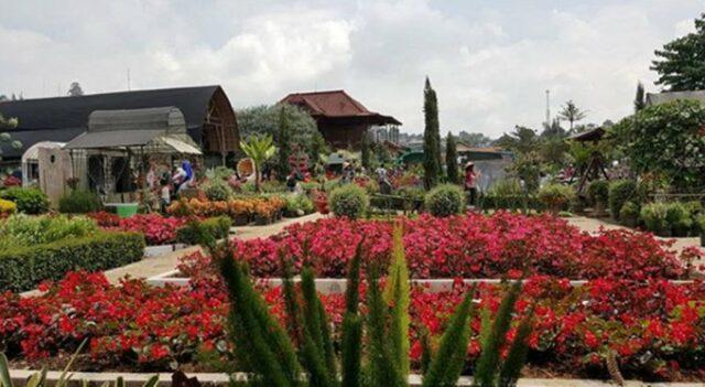 Taman Bunga Begonia Lembang
