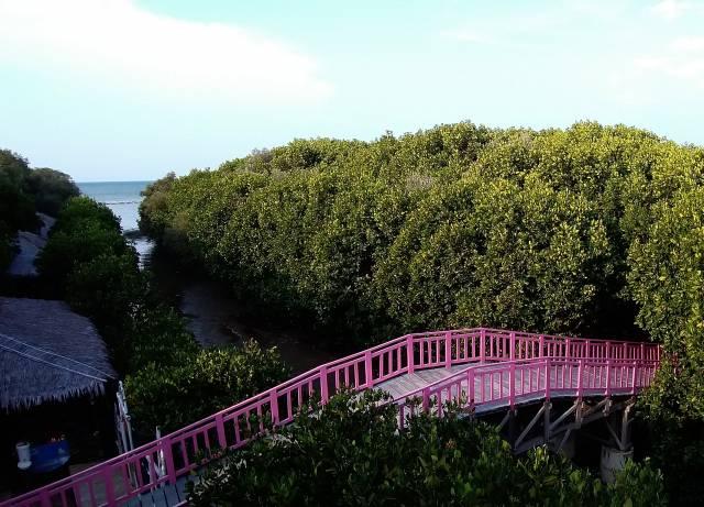 jembatan pink ikonik hutan mangrove brebes pandansari
