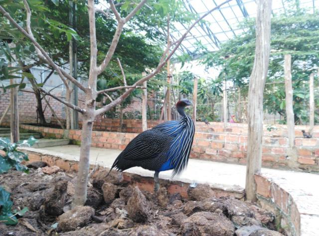 Kandang Burung Raksasa
