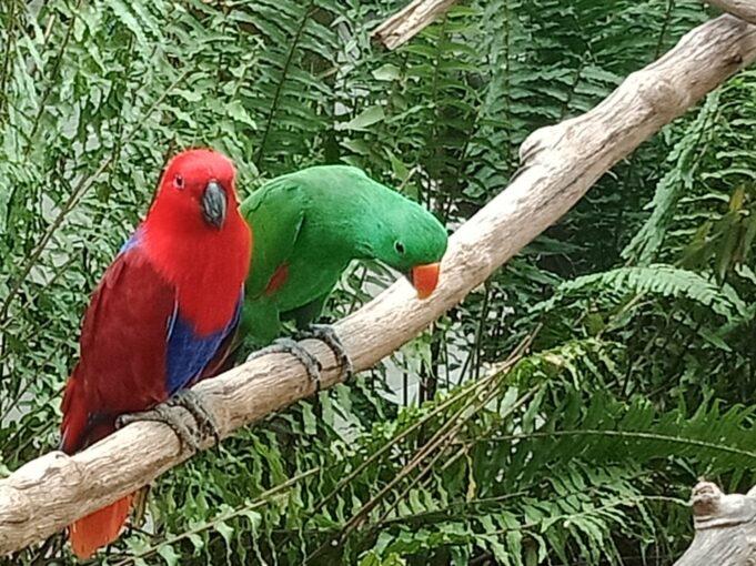 kebun binatang gembira loka zoo