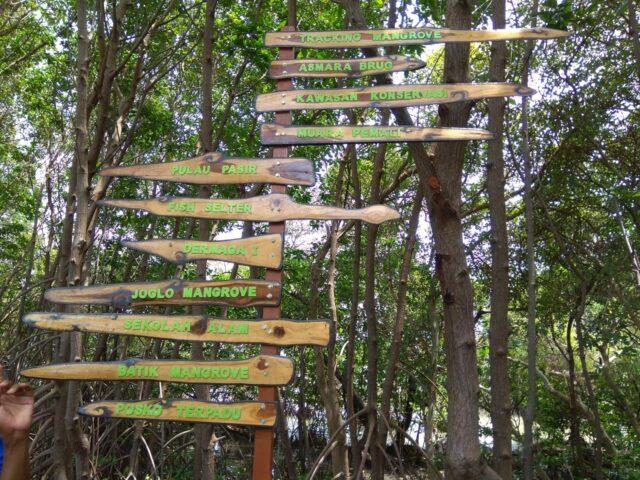 Petunjuk Arah Hutan Mangrove Pandansari Brebes