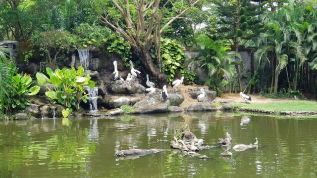 taman burung di Gowa Discovery Park