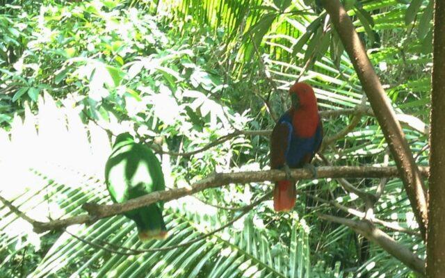 Taman burung di GDP