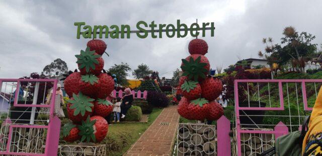 Taman strawberry