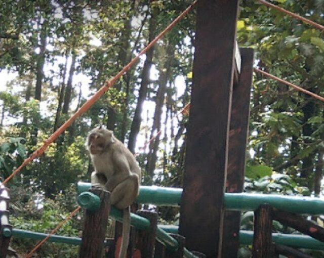 Monyet liar di sekitar kawasan wisata