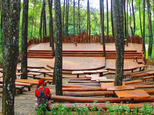 panggung alam di kawasan hutan pinus