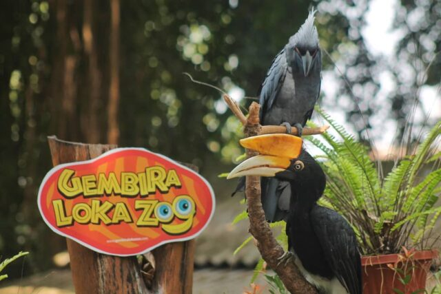 satwa burung gembira loka zoo Yogyakarta