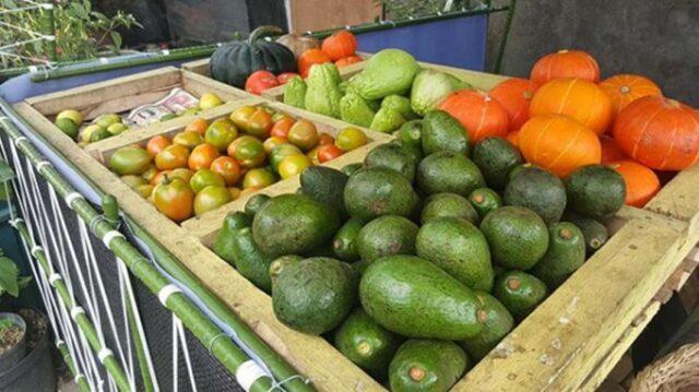 Sayuran dan buah segar di Kebun Begonia