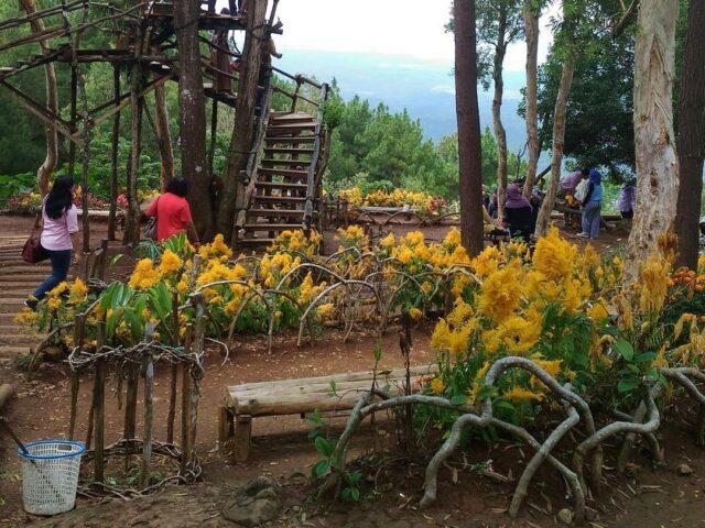 taman bunga hutan pinus mangunan