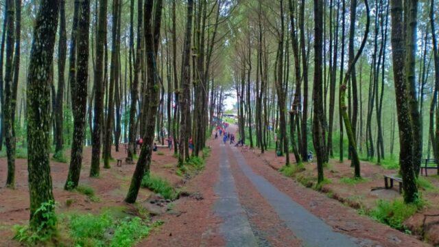 area kawasan wisata hutan pinus