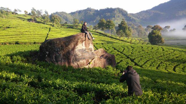 Batu Gede di area kebun teh Rancabali