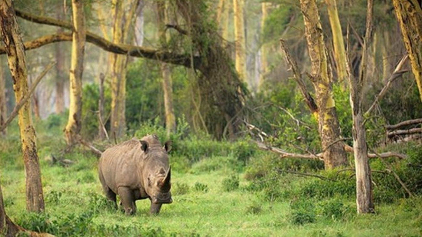 Hasil gambar untuk 1. Taman Nasional Ujung Kulon