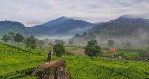 keindahan pemandagan perbukitan kebun teh rancabali
