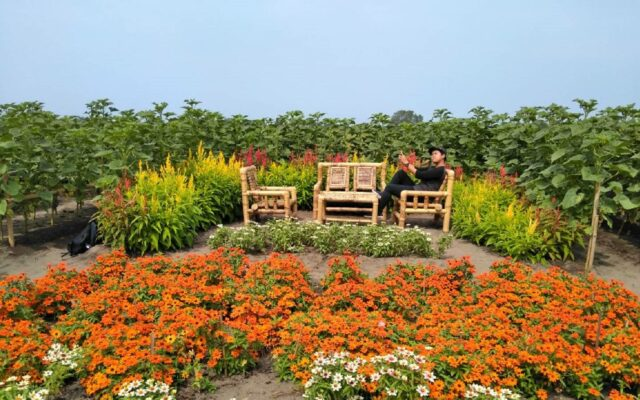 Kursi Kayu di Taman Bunga Matahari Bantul