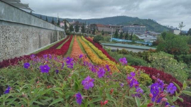 Ladang Bunga Berbagai Warna di Rainbow Garden