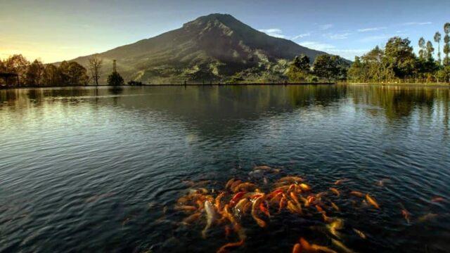 memberi makan ikan di danau embung kledung