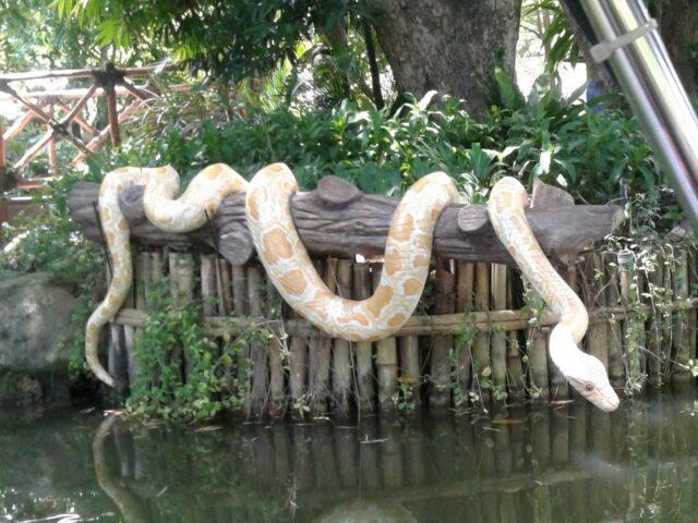 ular replika di tepi sungai