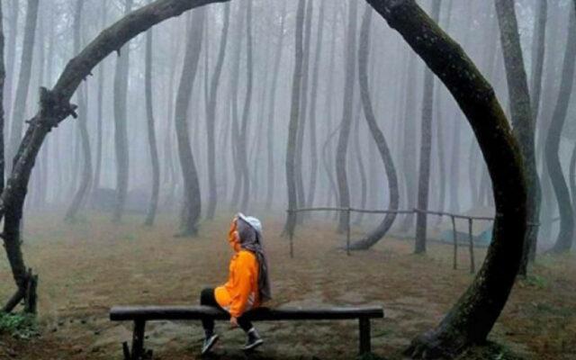 Selimut Kabut di kawasan hutan pinus