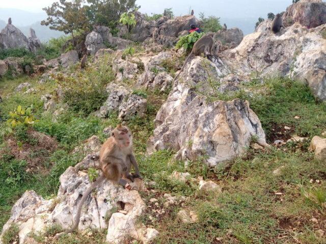 Perbukitan yang menjadi Habitat Bagi Monyet Gunung
