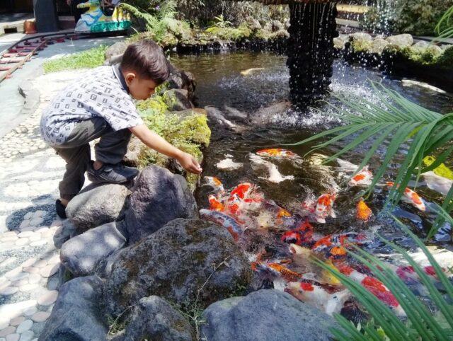 berinteraksi dengan ikan di fish garden blitar