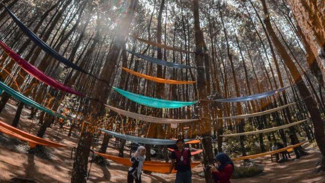 hammock top selfie hutan pinus kragilan magelang