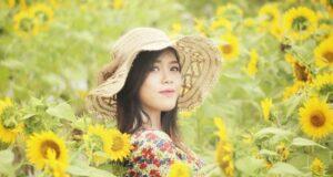 hamparan taman bunga matahari taman dewari magelang
