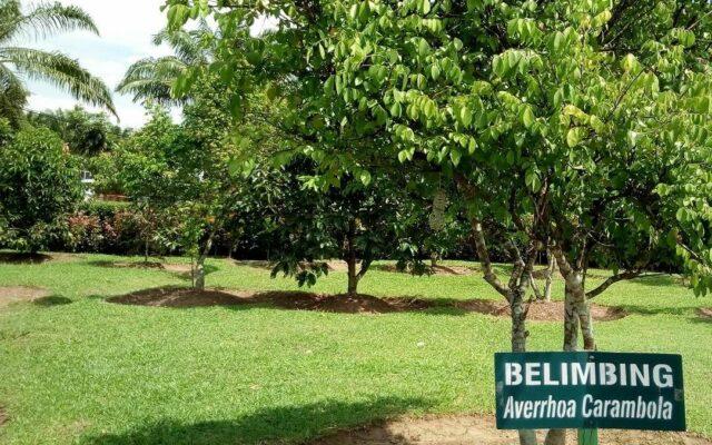 Area tanam buah Belimbing