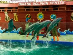 Batang Dolphin Center Lumba-lumba