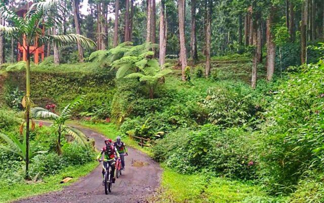 Bersepeda di area kebun raya