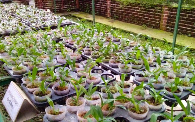 Budidaya tanaman anggrek