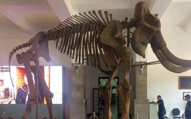 Fosil hewan di lantai 1 Museum Sri Baduga Bandung