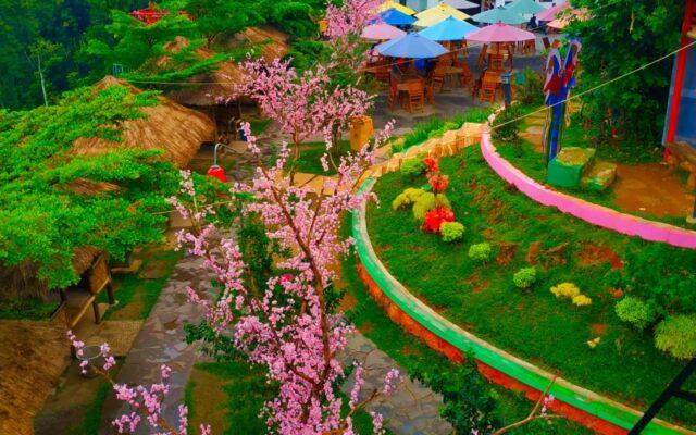 keindahan jejeran pohon sakura