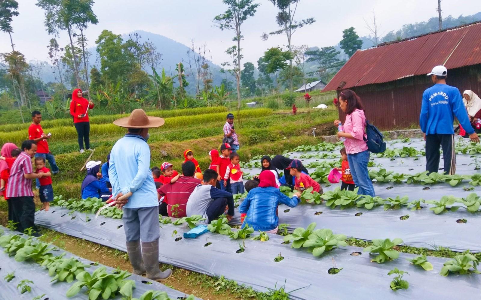 Agrowisata Amanah Tiket Aktivitas Januari 2020 Travelspromo