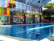 kolam renang dewasa indoor