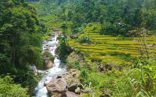 pemandang hijau alam sekitar