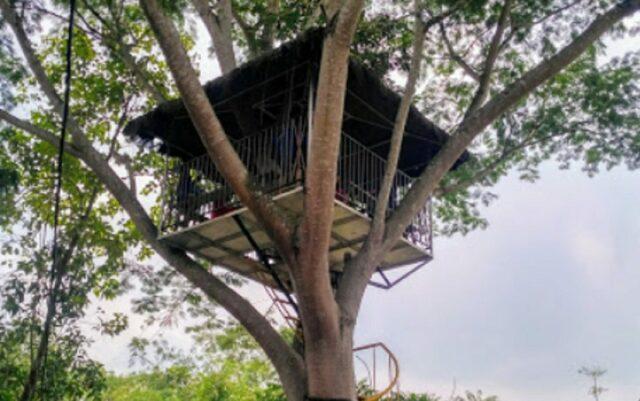 Rumah pohon di taman botani sukorambi.