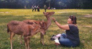 Rusa jinak di taman partinah Taman Balekembang Solo