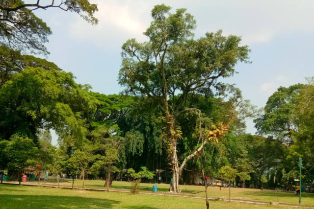 area taman balekembang solo