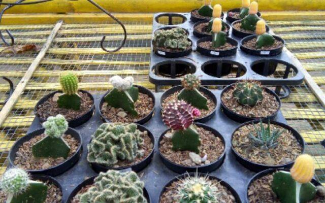berbagai tanaman hias