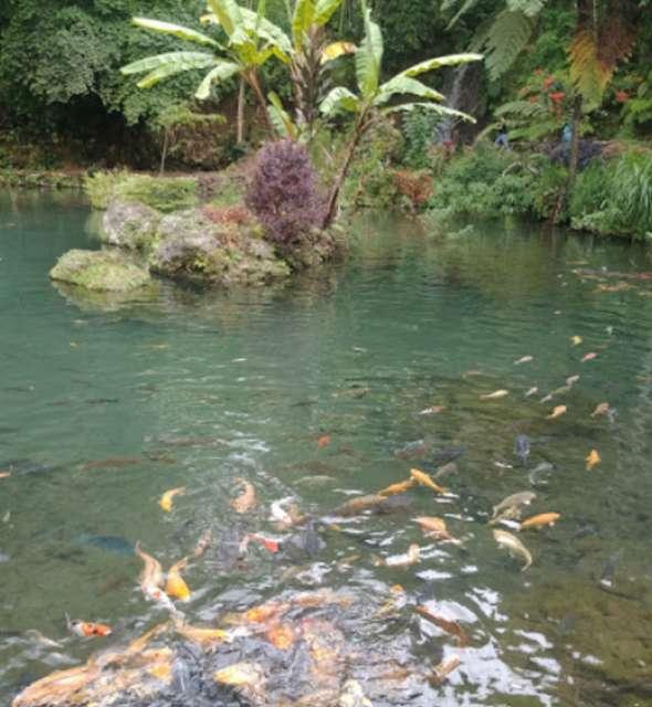 Ikan di kolam - Elvi Darmawan