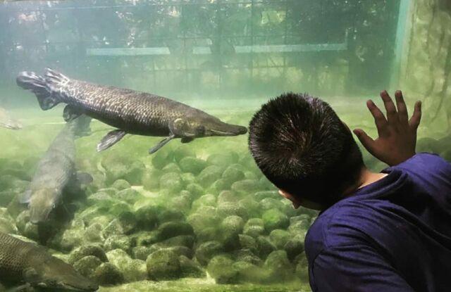 Mengamati koleksi ikan di Monster Aquarium Cimory Riverside Bogor