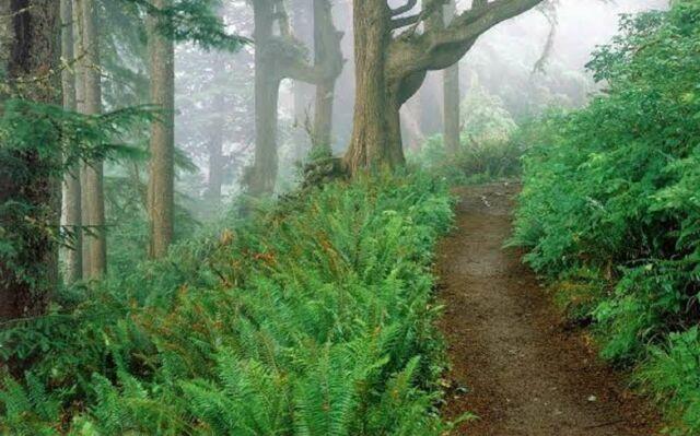 Menuju Curug Pangeran Bogor, wisatawan akan melakukan treking ringan dengan jarak yang tidak terlalu jauh