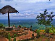 kawasan perbukitan hutan pinus asri